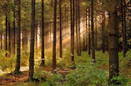 forest_zak