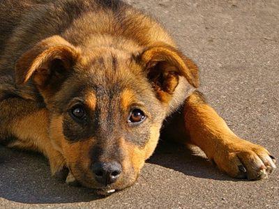 stray_dog